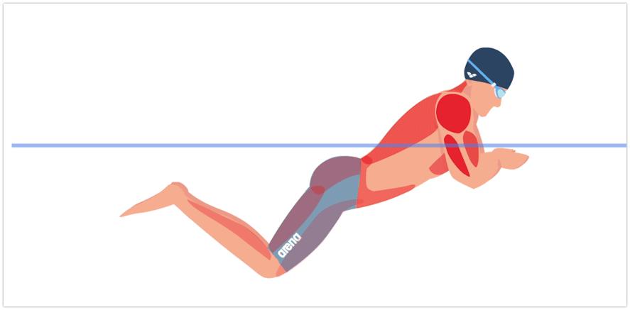 время показать плавание кролем какие мышцы работают фото видно, что