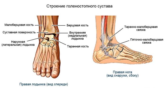 Упражнения, укрепляющие мышцы вокруг голеностопного сустава форма коленного сустава