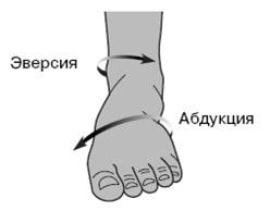 Движение лодыжки и стопы при беге